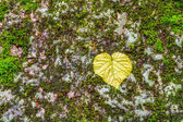 Colorful Autumn Leave on a Stone — Stock Photo
