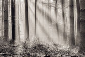 Enchanted Autumn and Winter Forrest — Stock Photo