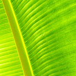 Tropical Leaf — Stock Photo #47175049