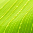 Tropical Leaf — Stock Photo #47178041