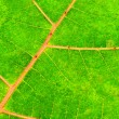 Tropical Leaf — Stock Photo #47178371