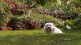 Cute Funny white Dog — Stockfoto