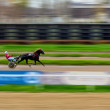 Horserace — Stock Photo
