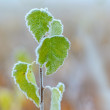 Young tree on a frost. — Stock Photo