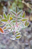 Freezing plant. — Stock Photo
