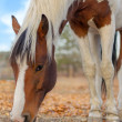 Stock Photo: Dappled horse.