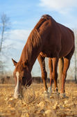 馬をかすめる. — ストック写真