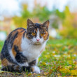 Striped cat in city park. — Stock Photo