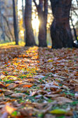 Fallen leaves on the grass in the park. — Stock Photo