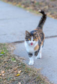 Cat who walks in itself. — Stockfoto