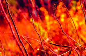 Prickly fire. — Stock Photo