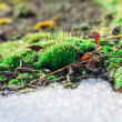 Stock Photo: Moss and thawing snow.