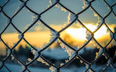 Frozen netting. — Stock Photo