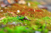 Moss sprouts. — Stock Photo