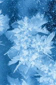 Fiore di ghiaccio. — Foto Stock