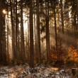 Early morning in forest — Stock Photo #30234125