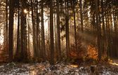 Early morning in the forest — Stock Photo