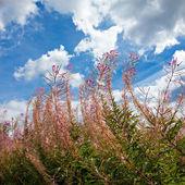 Kleurrijke struiken tegen een blauwe hemel — Stockfoto