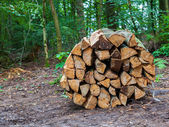 Wooden logs bundled — Stock Photo