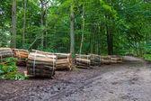 Wooden logs bundled — Stock Photo