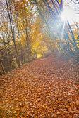 Färgglada löv — Stockfoto