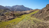 Green Grass in the Mountains — Stock Photo