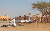 Traditional Camel Market in Al Ain in the UAE — Stockfoto