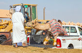 Traditional Camel Market in Al Ain in the UAE — Stock Photo