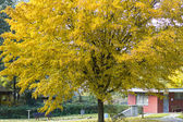 Yellow leaves tree — Stock Photo