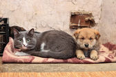 Homeless cat and dog — Stock Photo