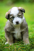 Puppy in the yard — Foto Stock