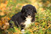 Puppy in the yard — Stock Photo