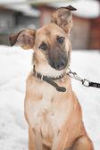 Perro sentado en la nieve — Foto de Stock