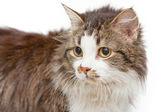 Sad cat on white islated background — Stock Photo