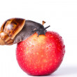 Black snail on red apple — Stock Photo #37671465
