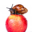 Black snail on red apple — Stock Photo