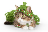 Cat wearing a Christmas tree is isolated on white — Stock Photo