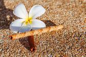 Frangipani flower on sandy floor with sweet taste — Stock Photo