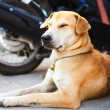 Stock Photo: Dog rest on road