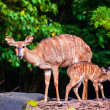 Mother's love, deer and cute fawn — Stock Photo