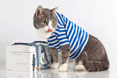 Grey cat in seaman suit on background with chest — Stock Photo