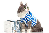 Grey cat in seaman suit on isolated background with chest — Stock Photo
