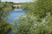 Part of the Roman bridge of Salamanca between trees — Stock Photo