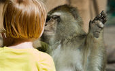 Barbary Macaque and child head — Stock Photo