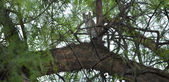 Eurasian Scops owl sleeping on a branch — Stock Photo
