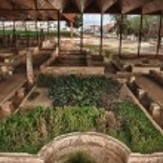 ������, ������: Patrician house gardens
