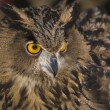 European Eagle-Owl 4 — Stock Photo