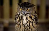European Eagle-Owl 2 — Stock Photo