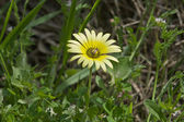 Daisy hightly populated — Stock Photo