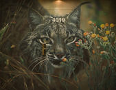Wall picture of a Lynx — Stock Photo